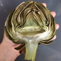 Cleaned Artichoke